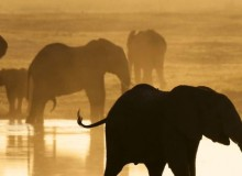 elephants-chobe-reserve