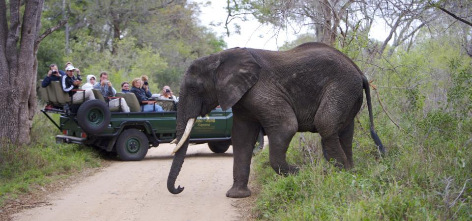 kapama-elephant